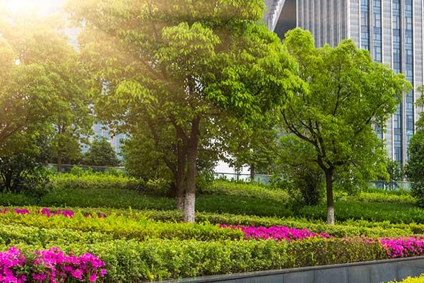 Commercial Tree & Shrub Pest Conrol