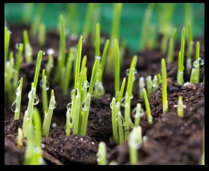 aeration-and-seeding