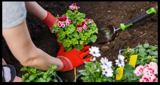 flower-planting