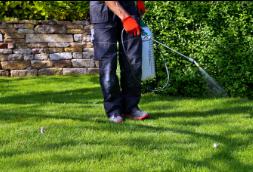 pest-control-services